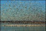 Scattered Flock