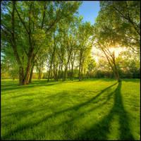 Springtime Warmth by FramedByNature