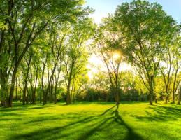 Springtime Warmth III by FramedByNature