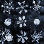 Day 356 - Snowflakes