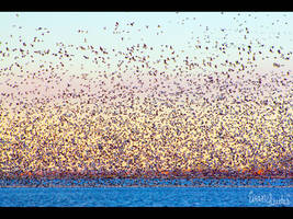 Birds in Pastel by FramedByNature
