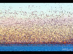 Birds in Pastel