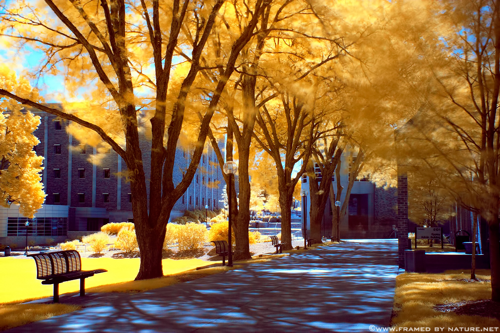 Infrared Education by FramedByNature