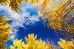 Skies Above Autumn