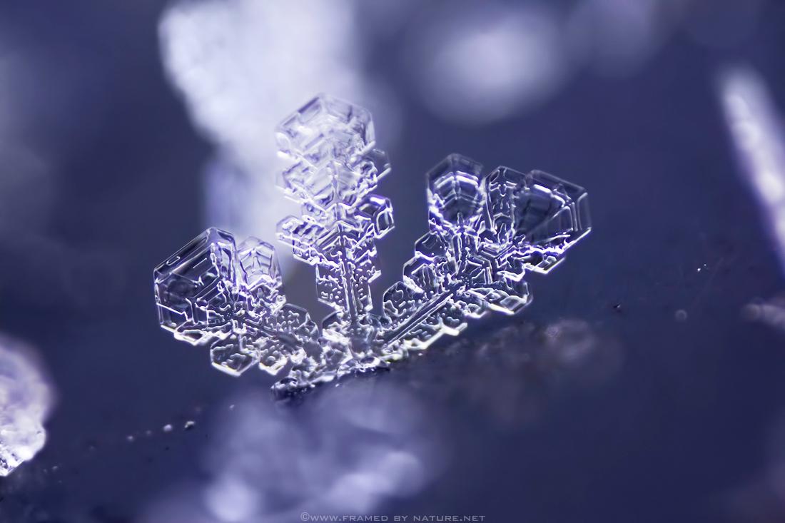 Frosty December by FramedByNature