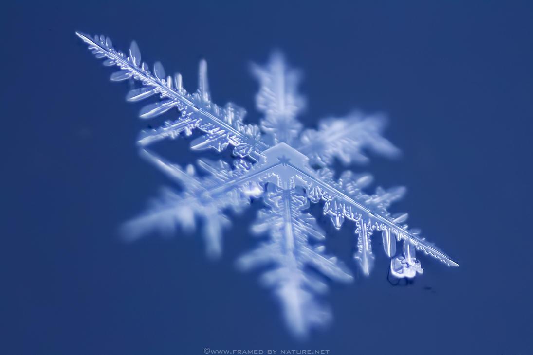Christmas Flake 2012 by FramedByNature
