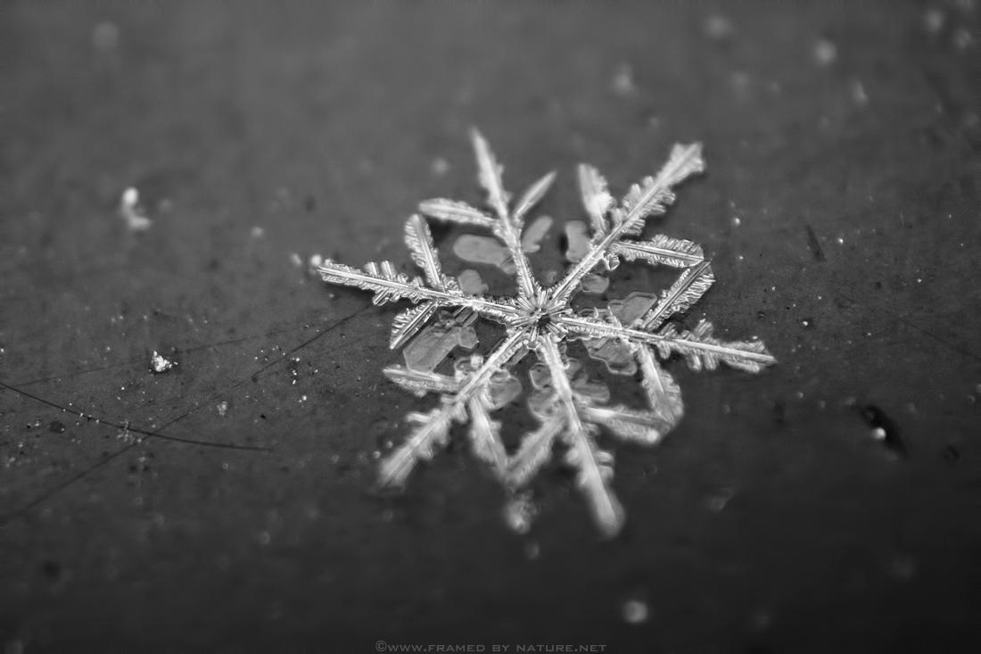 Stellar Crystal by FramedByNature