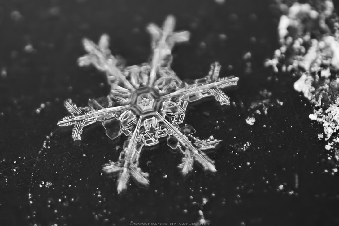 Stellar Crystal II by FramedByNature