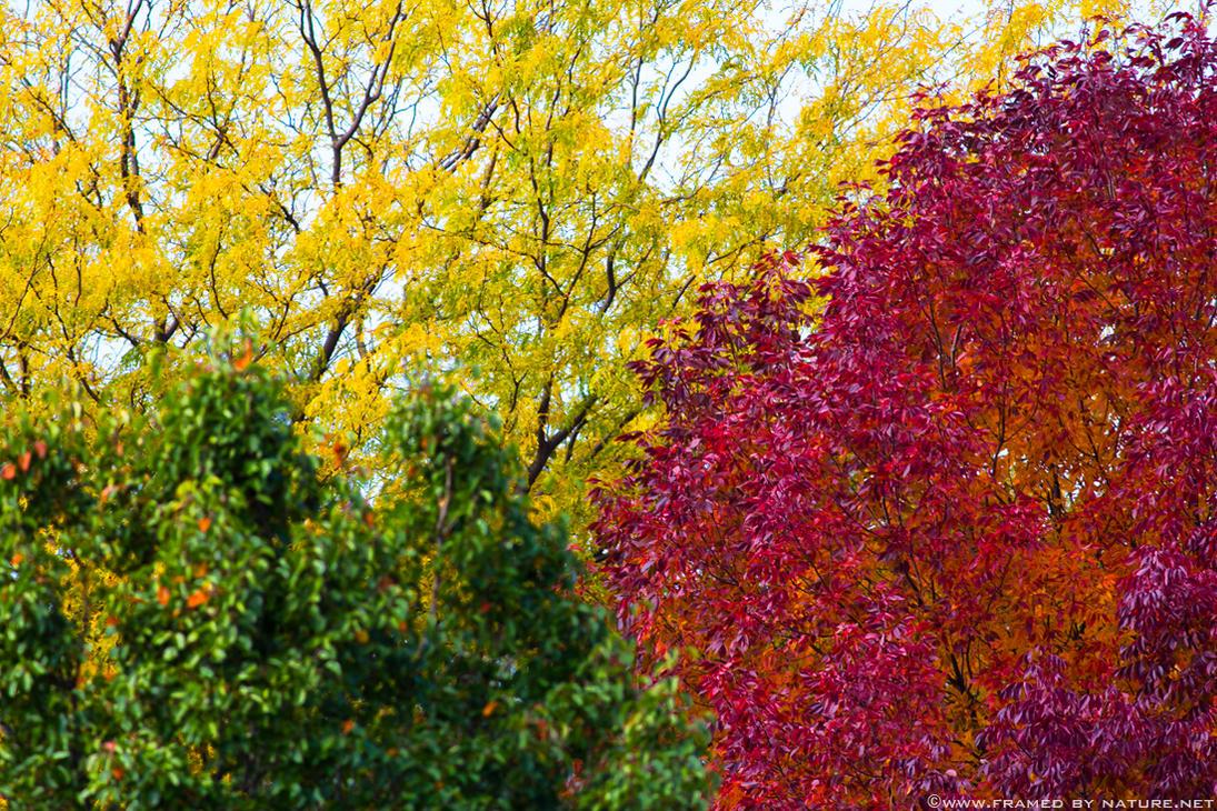 October 18th by FramedByNature