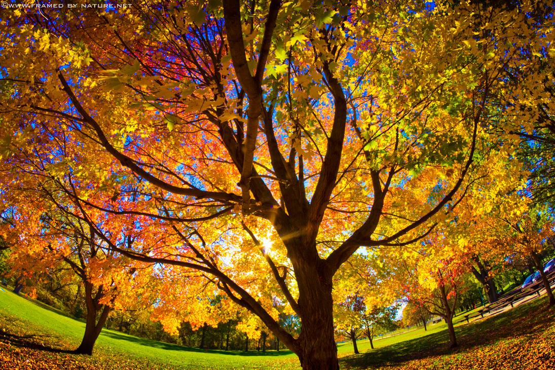 October 30th by FramedByNature