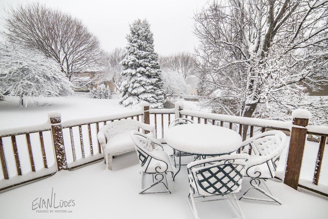 33: Backyard Blizzard by FramedByNature