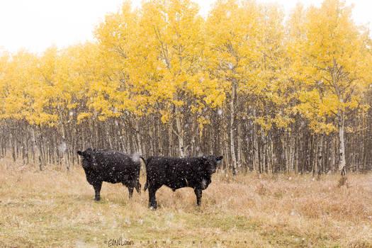Agricultural Autumn