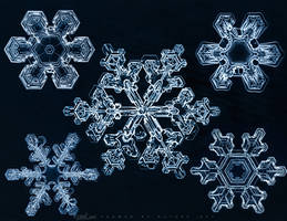 Gems of Winter by FramedByNature