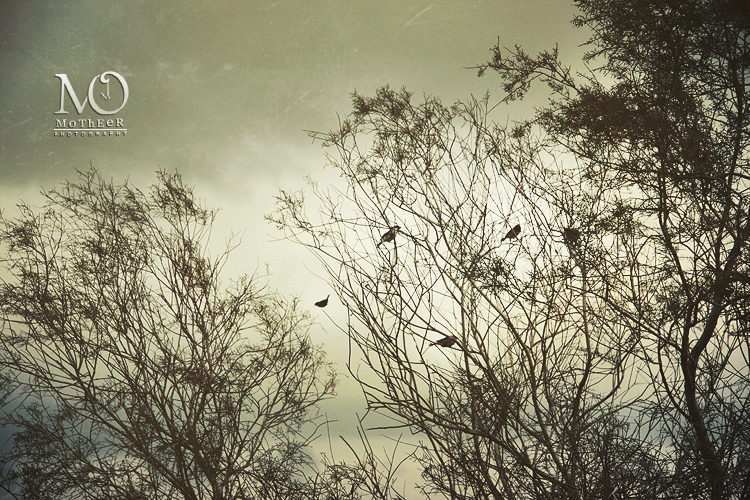 Birds and the trees by MoThEeR-212