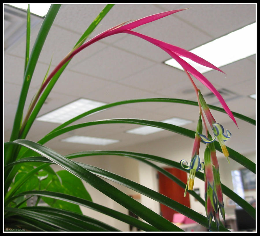 Office Plant by skoticus