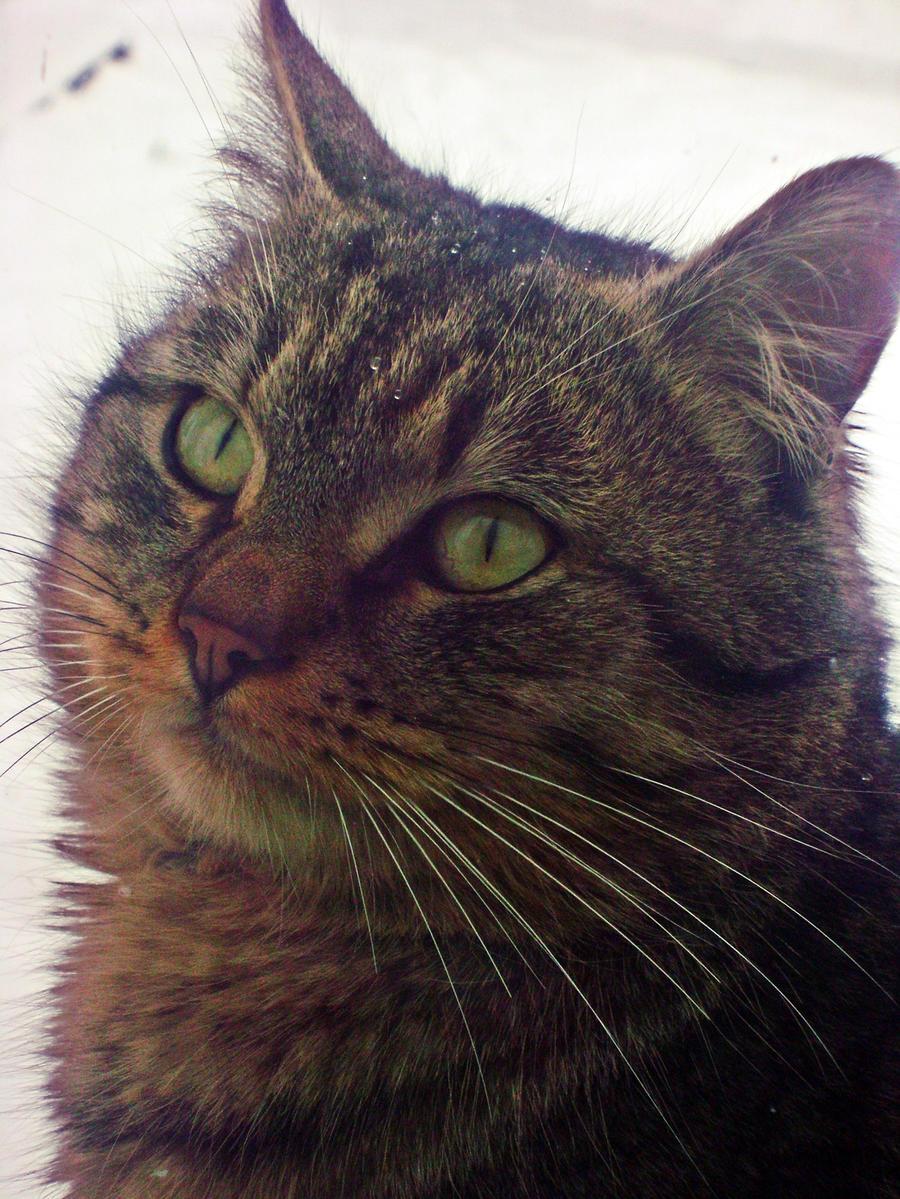 my kitty. by emoke93