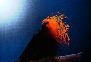 Blue Bird by Maderath