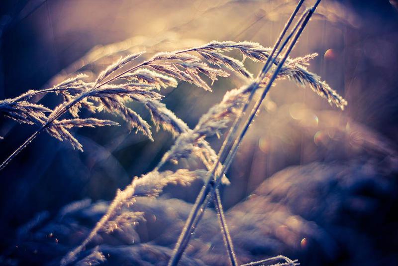 tenderness by Nastasie