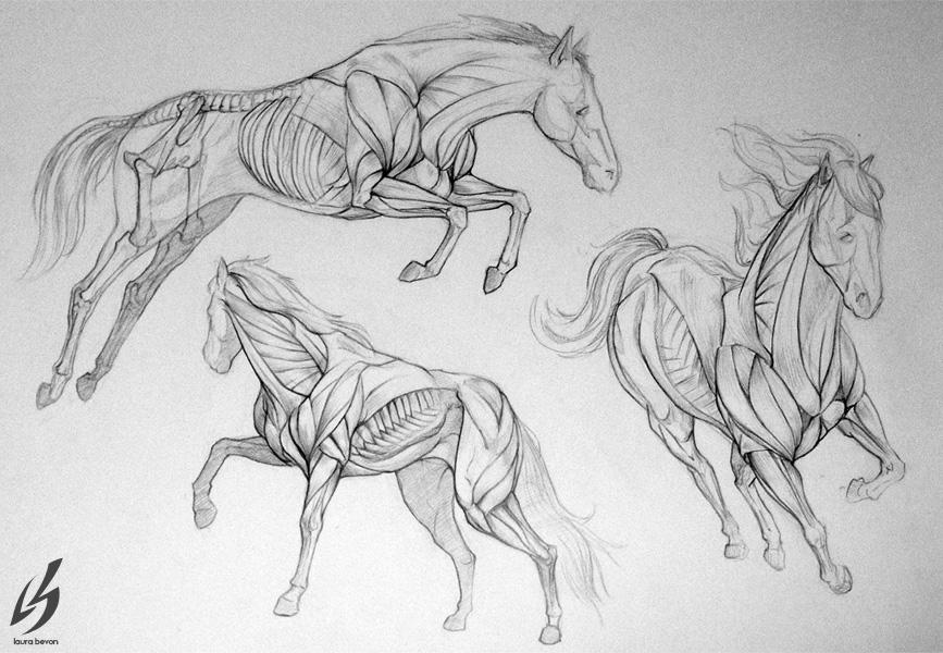 Horse Anatomy by LauraBevon on DeviantArt