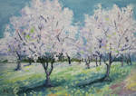 Apple orchard again