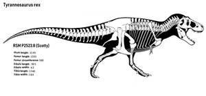 Scotty skeletal