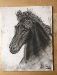 Black Horse by the1llustrator