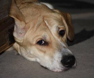 Dog by kibbecat
