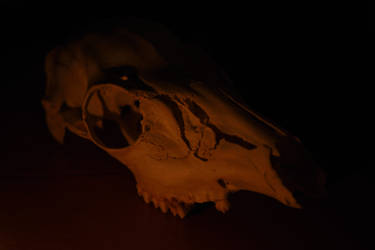 Deer Skull 1 by kibbecat
