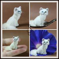 Bi-Color Eye White Cat by Teensyweensybaby