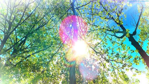May Shining In The Forest