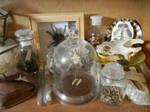 Reptile Amphibian insect etc shelf pt 2