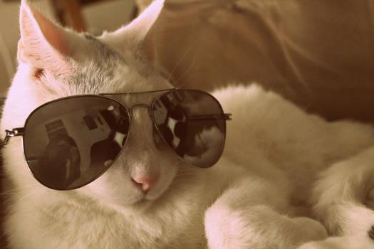 What a Kool Cat