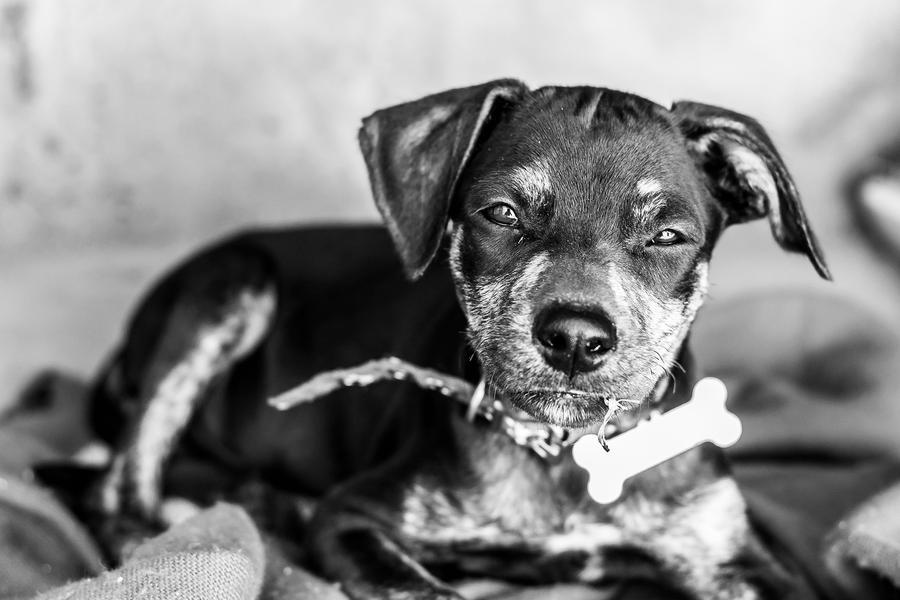 The Doggy by LuchoRocha