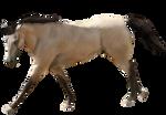 Pre-cut Buckskin Quarter Horse