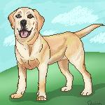 Labrador Retriever by quinnrenee