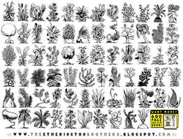 70 Plant And Flower Designs by EtheringtonBrothers