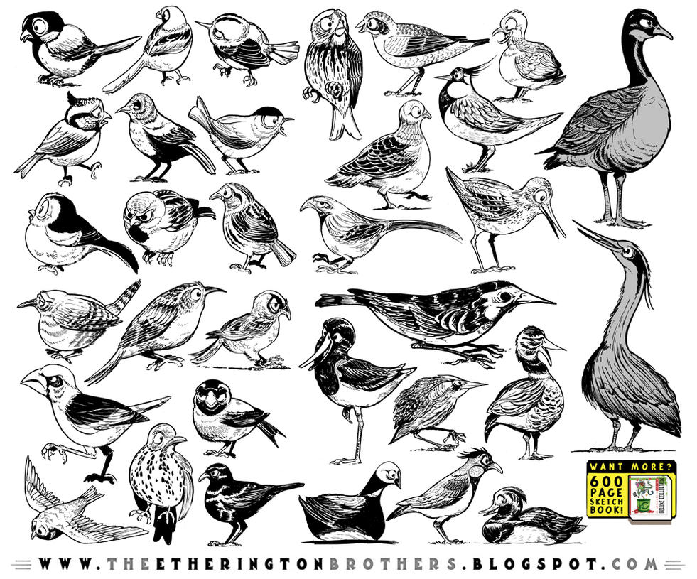 33 Bird Designs by STUDIOBLINKTWICE