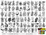 70 PLANT, FLOWER and TREE REFERENCES!