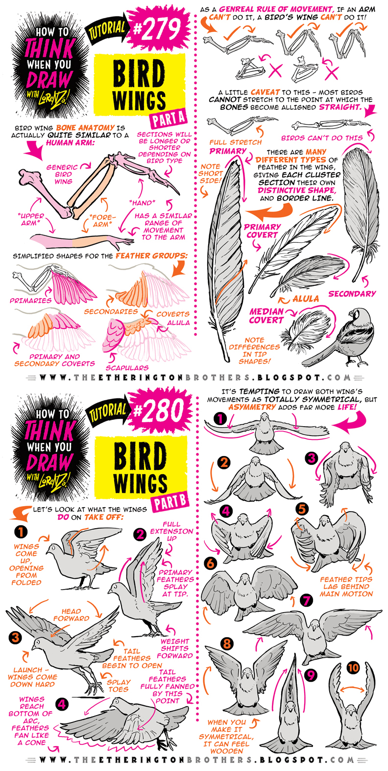 How to THINK when you draw BIRD WINGS tutorial!