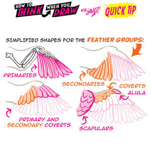 How to THINK when you draw BIRD WINGS QUICK TIP!