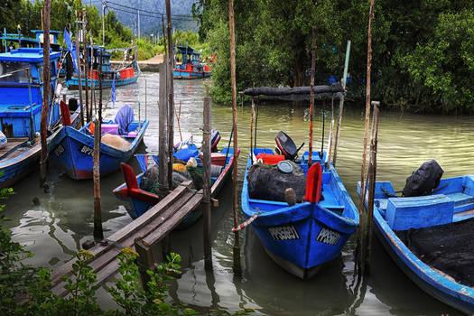 Mangrove Swamp River
