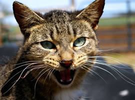 Barn Cat by weirdklown