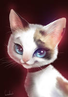 Evie, my cat by MistressAinley