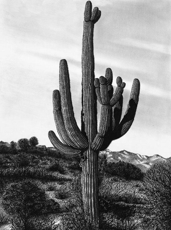 Giant Saguaro by graphiteartistaz