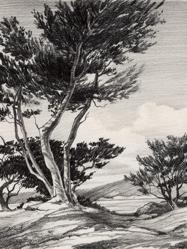 Carmel Cypress - pencil by David-McCamant