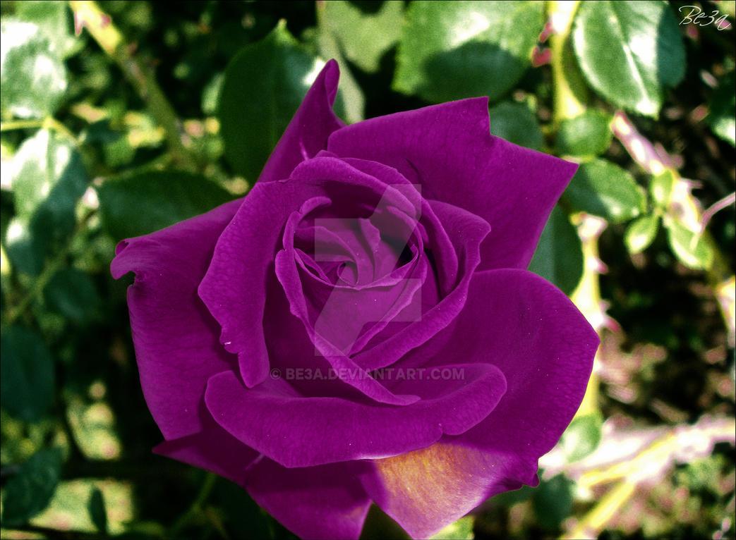Violet Rose naked 417