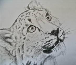 Snow Leopard Cub by XxInsanityX