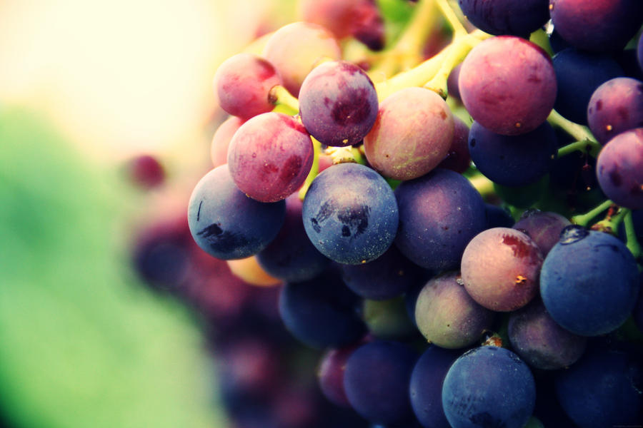 Grapes by Marjobsoleta