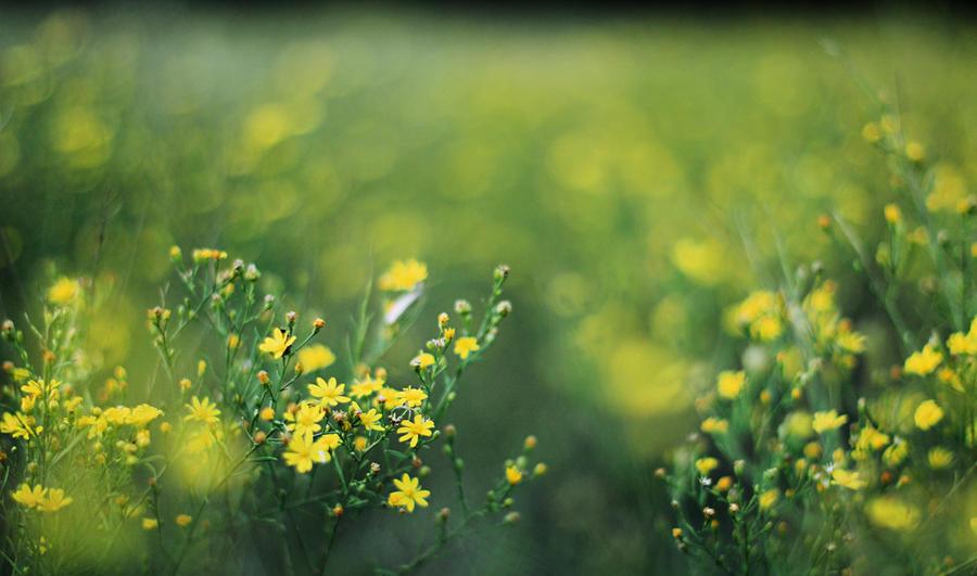 Yellow Flowers by Rana-Rocks