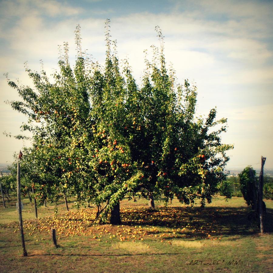 The pear tree by martaraff